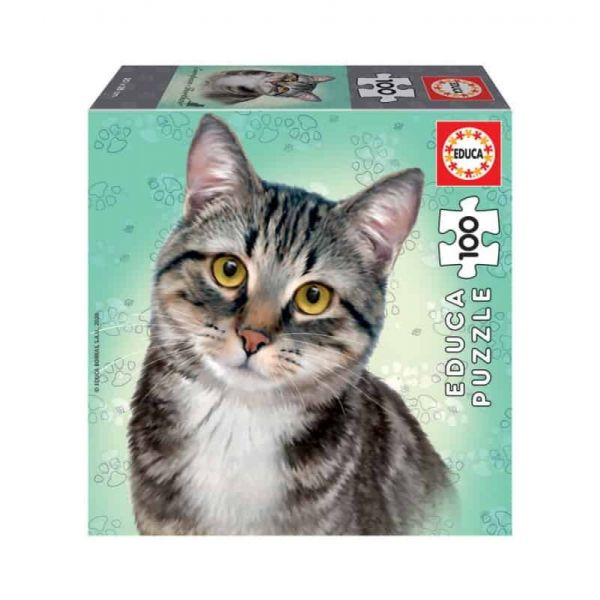 290616 3 educa cat breeds 100 european shorthair 18808